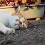 不眠で悩む人に効く、12の基本的な習慣